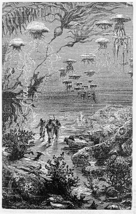 Illustration from Twenty thousand leagues under the sea by Jules Verne