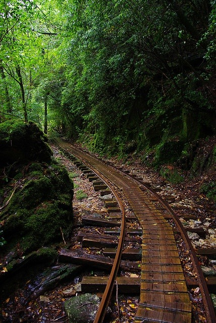 Forest Railway, Yakushima Island, Kagoshima, Japan photo via kate
