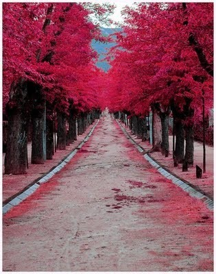 Places we love: Burgundy Street. Madrid, Spain (via)