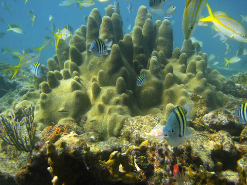5 beautiful coral species on track for endangered listingNOAA is proposing the addition of 66 coral species into the U.S. Endangered Species Act of 1973. Take a look at several reef-building corals facing major environmental threats.