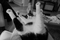 cat kitten cat gif meow wild kitten gif catgif meow city