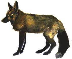 black fox. watercolors/multimedia brendan garbee