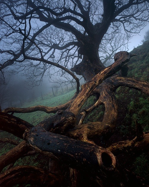 Tangled Tree, Dorset, England photo via laura