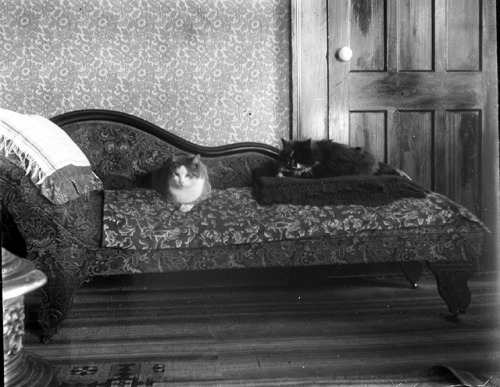 Cats on Day Bed by Vermont Historical Society on Flickr.