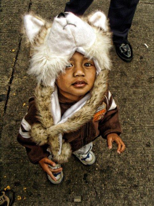 The wolf cub