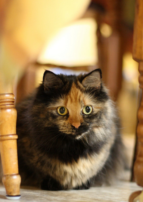 mostlycatsmostly:  (via The Boneyard)