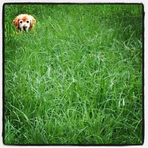 In the jungle. #dog