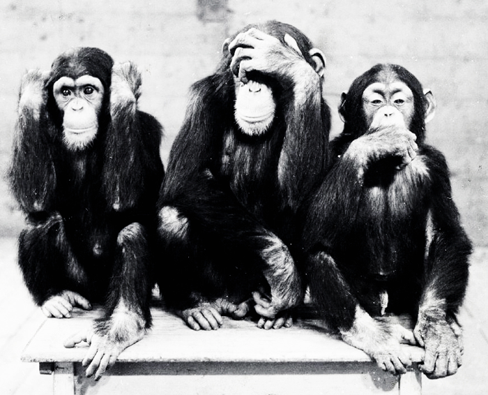 vintagegal:  Three Chimps in Hamburg Zoo, Germany (1954)