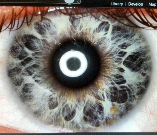 Little bit of macro work today, it's my eye!