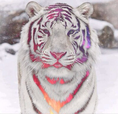 Tiger pe We Heart It.