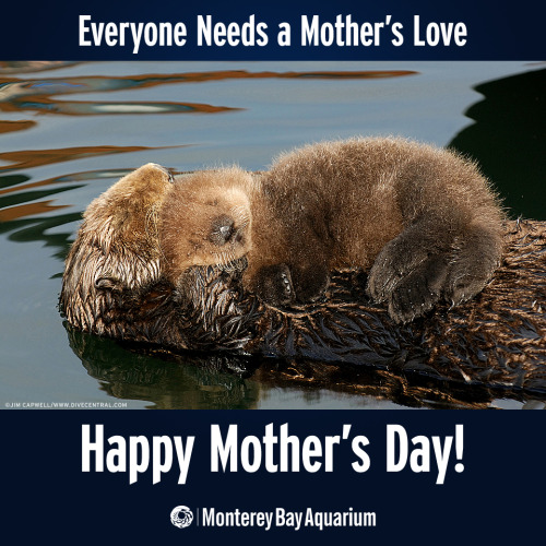 wellthatsadorable:  Happy Mother's Day!! Call your mom, let her know what a gem she is, take her out to dinner, smother her with gifts and love. She deserves it! (via)  Soooo cute!!