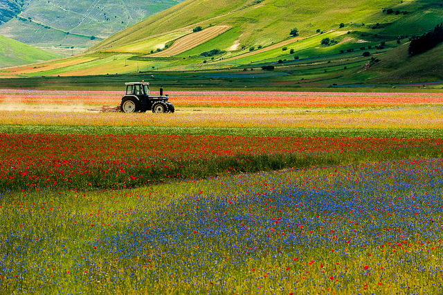 illusionwanderer:  Trebbiando in Castelluccio by Antonio Zarli