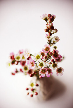 elorablue:  Pink and White -1 by chick*pea on Flickr.