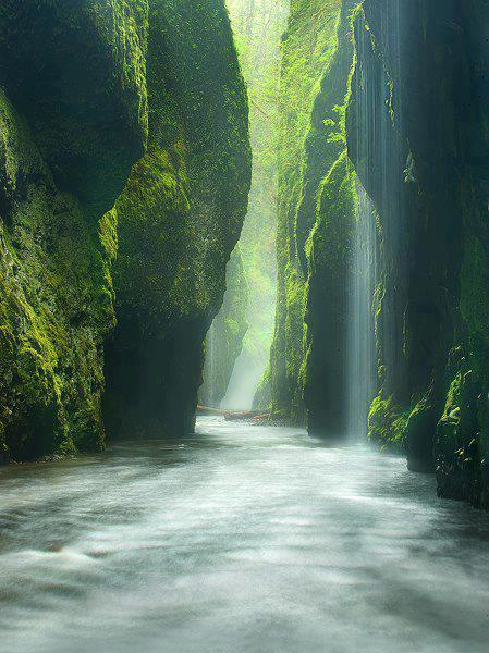 Timeline Photos | Facebookfacebook.com  Rainforest Canyon in Oneonta Gorge, Oregon, United States.  We Live In A Beautiful World  Follow us on tumblr ==> http://flip.it/uncd2