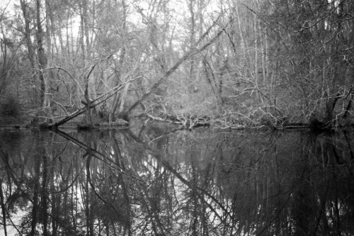 Reflection in the wood Olympus OM2n / Zuiko 35mm f2,8 / Kodak TriX400