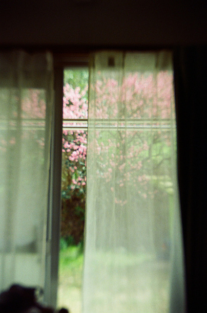 8birds:  curtains by timotical on Flickr.
