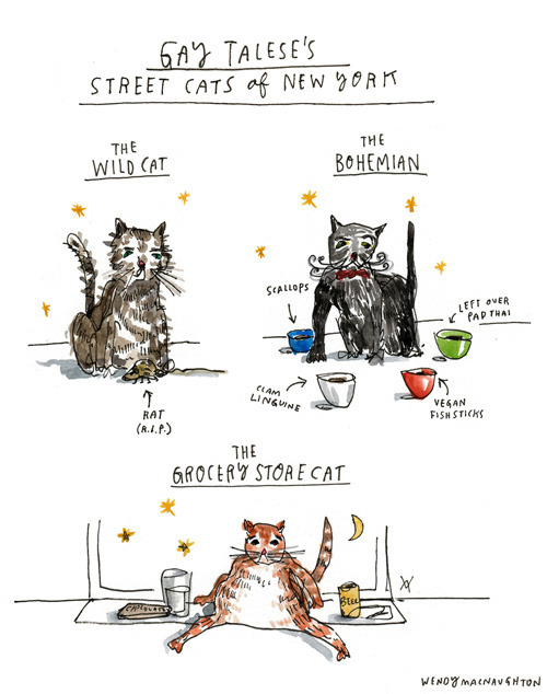 Gay Talese's cat archetypes of New York, illustrated by Wendy MacNaughton.