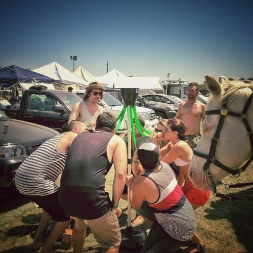 No, you can't beer bong, horse. Go home, your a horse. #coachella