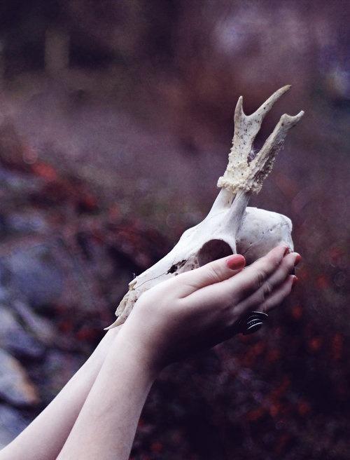 skull oddities macabre animal bones bone bones skeletal lovely witchy conjure spell