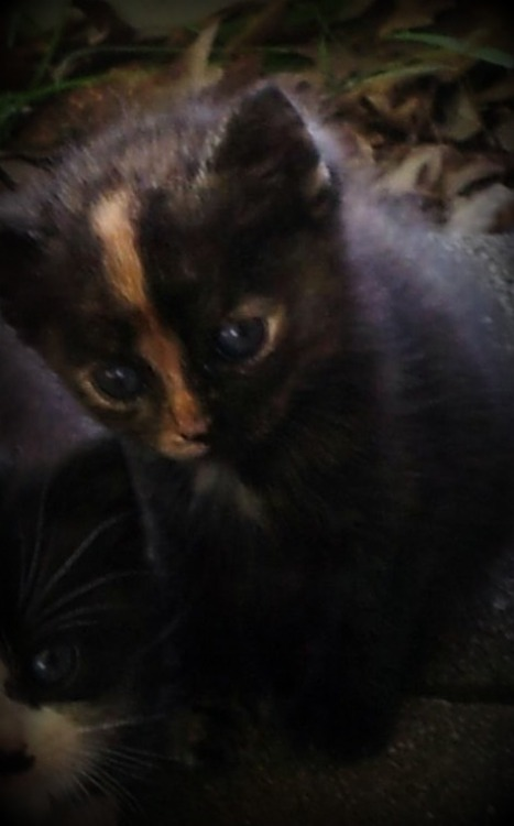 ambulancedance:  I'm gettin' a kitten! Only two more weeks, then she's mine! <3