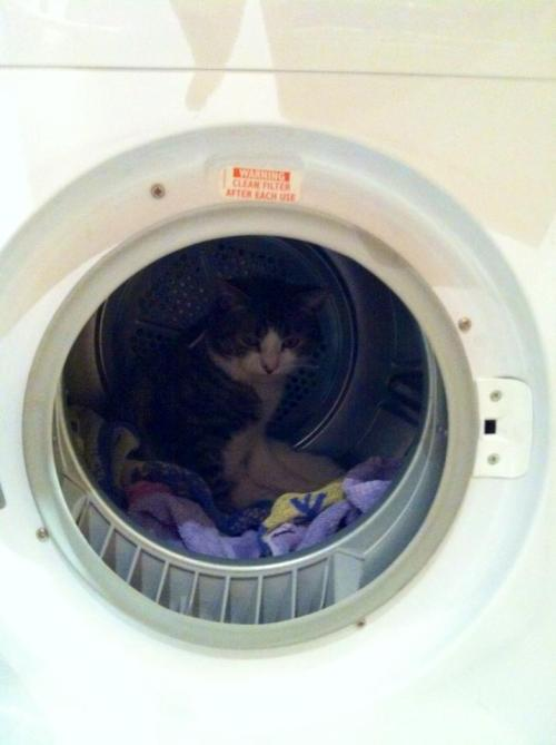 get out of there cat. stop assuming that you also may need drying along with the rest of the washing….