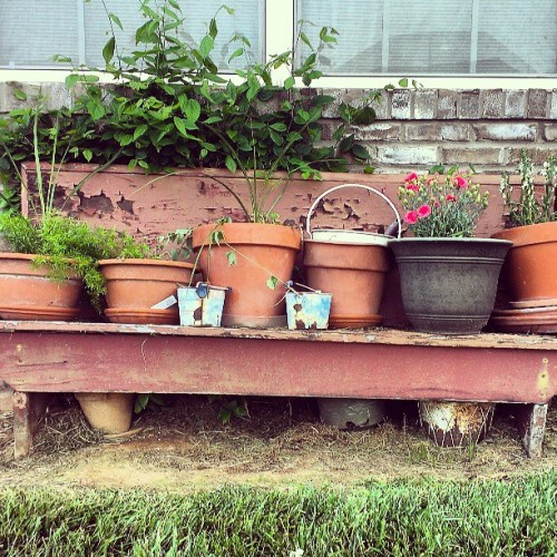 This old ass bench and empty pots have been chillin here for years. Finally planted some Shit in em. #plantlife