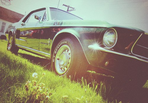 1967 Pony by bOw_phOto on Flickr.