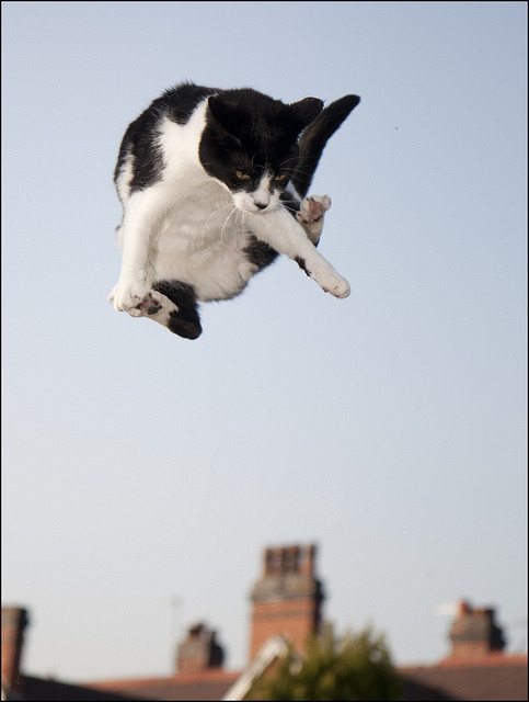 "catsbeaversandducks:  A Royal Marines Hovercat made a ""hard landing"" on Tuesday during a training exercise in London. Photo via CyberGata"