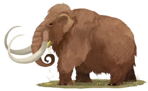 Here's a woolly mammoth I drew for Sierra Magazine. Please hire me to draw more woolly mammoths - they are the best.