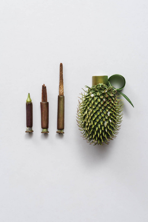 Harmless Weapons Made of Plants by http://www.soniarentsch.com/