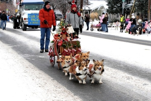 Corgi bells, corgi bells, corgis all the wayOh what fun it is to ride in a corgi-driven sleigh, HEY!
