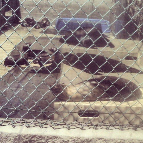 Seals in rehab at the Marine Mammal Care Center #seals #animals #SanPedro