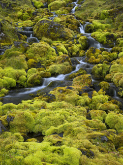 ecocides:  Icelandic moss| image by Antony Spencer
