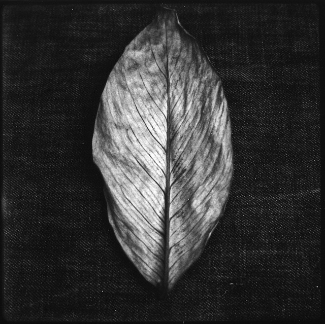 Instant Leaf on Flickr.