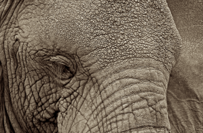 The glorious texture of elephants…