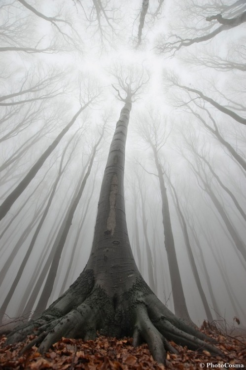 mydarling:   Surreal Forests of Romania