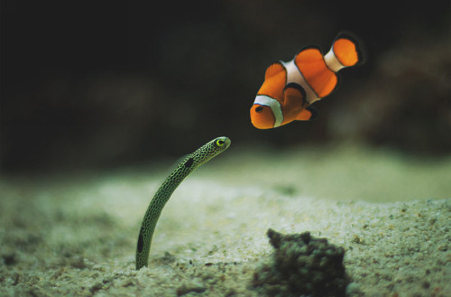 magicalnaturetour:  Nice to meet you nemo Source