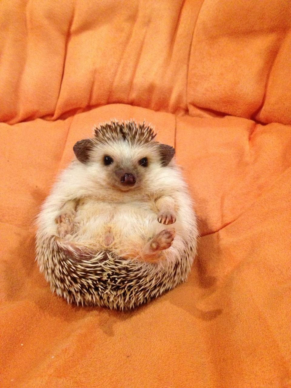 gottalovehedgehogs:  Excuse me but this seat is taken.