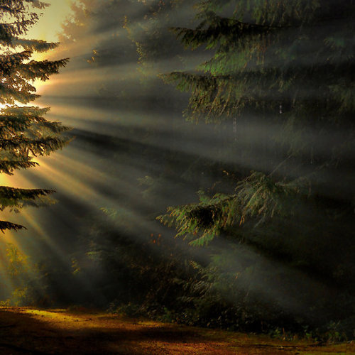 bluepueblo:  Sun Ray Forest, Oregon photo via findfresh