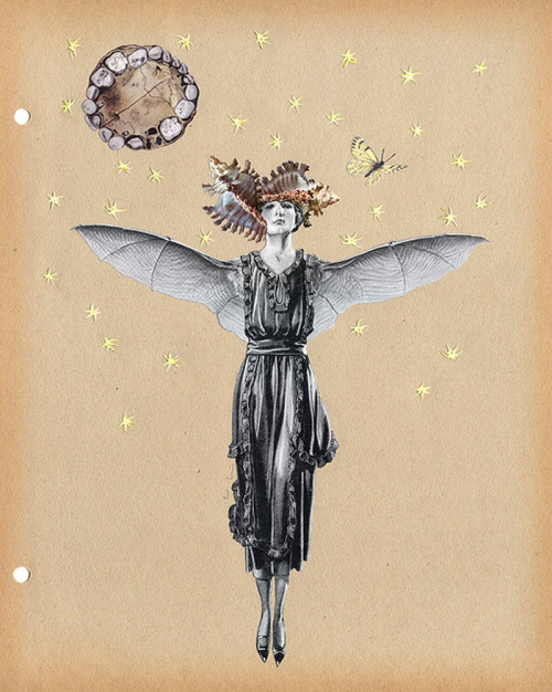 bat lady, alexis anne mackenzie
