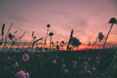 Get Daisy Flower Field Tumblr PNG