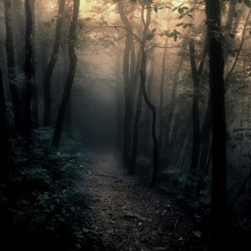 #forest #trees #woods #path #dawn #fog