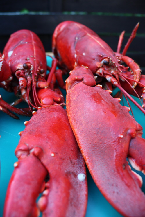 Yahoo. Tuesday is the best + we'd even go as far to call it Lobsterific! [sure, it's a word] Get our Lobster Sandwich, old bay fries and a beer for $22 at the Oyster Bar and East Village all night tonight.