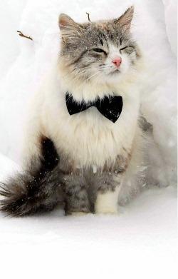 hello hello kitty,hello kittycats musicals,information about catmy kitten is,kitty web.cocat food,cats all aboucharmy kittragdoll cathello kitty cat clothehello koittcat fookittens,ragdoll cacaterpillar inc stock,m ca