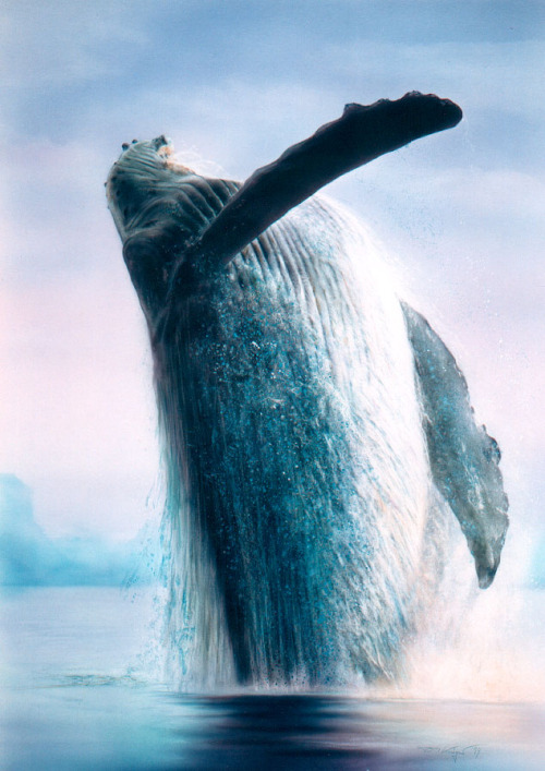 magicalnaturetour:  Humpback whale by ~illugraphy