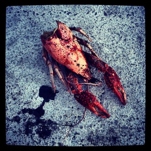 Poor little crawdad. Hopefully it was seasoned well.