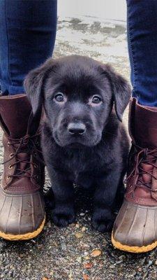 cute cute dogs cute animals cute puppy Fuego Approved