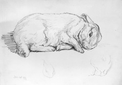 Beatrix Potter, 'Pencil study of Peter Rabbit' © Frederick Warne & Co. 2006 (via Beatrix Potter: The Tale of Peter Rabbit - Victoria and Albert Museum)