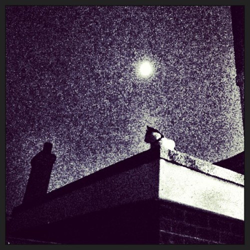 Heavily Edited Moonlit Cat. (at Mills/Swift's Abode)