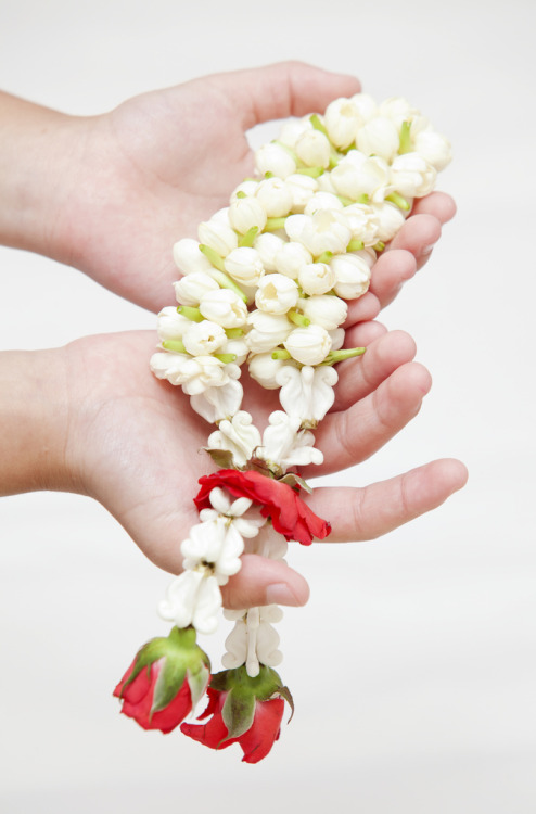 Phuang Malai - Thai flower garland, made by Jasmine flowers.